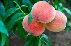微信卖水果宣传语
