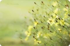 春暖花开优美的句子 陪你看春暖花开的句子