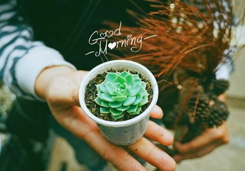 一天一句心情早安语
