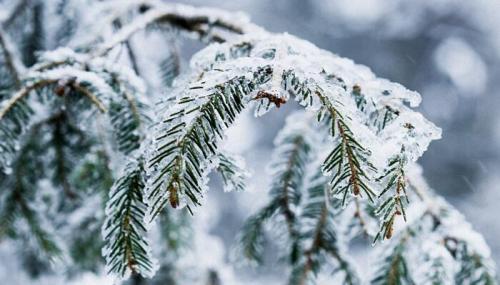 关于霜降的唯美句子很优美的形容霜降的句子